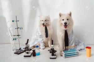Examenes de laboratorio clinico para perros y gatos