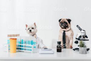 valores referencia laboratorios perros y gatos